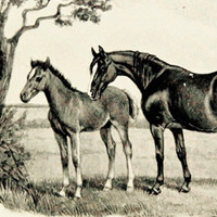 Thoroughbred mare and colt in pasture
