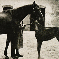 Mare and foal in stable yard