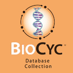 BioCyc database collection