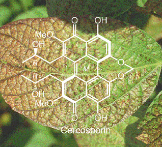 Kozlowski Group: Cercosporin
