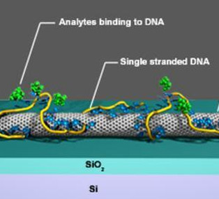 Chemical sensors using single-walled carbon nanotubes wrapped with single-stranded DNA adsorbed to the nanotube's outer wall.