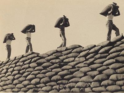 Photo of workers silhouetted against the sky, balancing wheat on their heads as they walk across a wall of bags of wheat