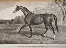 The Darley Arabian from Sir Walter Gilbey, The Harness Horse (London, 1898), Fairman Rogers Collection