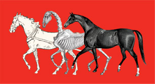 Equus Unbound: Fairman Rogers and the Age of the Horse