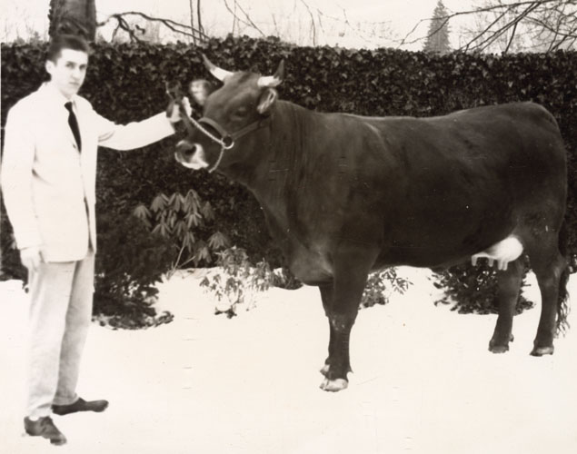 "Fritz Blank with the prize-winning Brown Swiss ""first calf heifer,"" Flo at Delaware Valley College. Photograph. Doylestown, PA, ca. 1961."